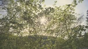 जंगलों की जादुई और अनछुए पहलू
