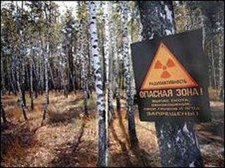 Лес около Чернобыля