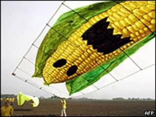 Campaña contra el maíz transgénico