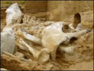 नरकंकाल (फ़ाइल फोटो)
