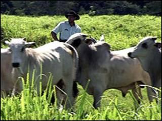 Fazenda de gado na Amazônia