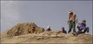 حفاری فسیل در چین