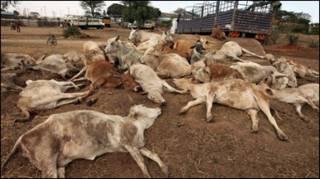 Ukame umeathiri raia na wanyama nchini Kenya