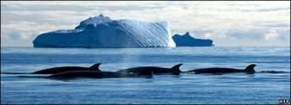 Cá voi ở Nam Cực