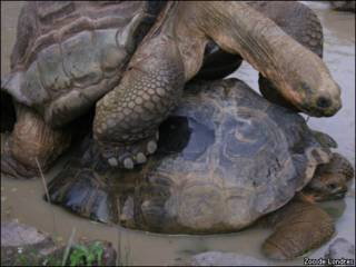Tartarugas em Zoo de Londres