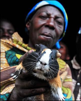 Criador de cuy en la provincia de Kivu del Norte, en RDC. Crédito: Neil Palmer (CIAT)