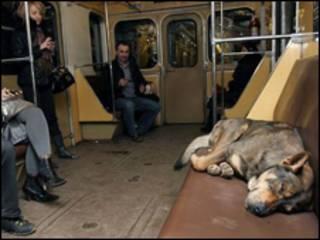 Бездомний пес у метро
