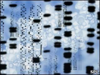Цепи молекулы ДНК