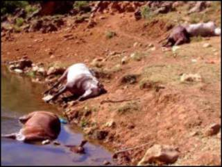 حیوانات کشته شده