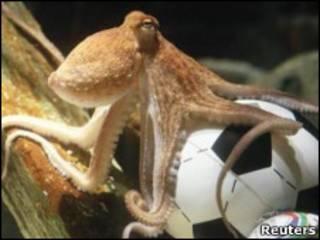 Осьминог Пауль на футбольном мяче