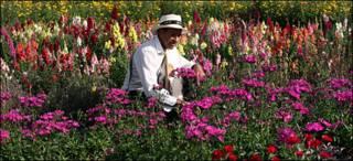 Plantaciones de flores en Santa Elena. Crédito: León Darío Peláez
