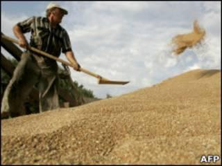 Рабочие собирают урожай