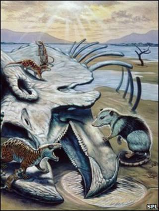 哺乳动物和恐龙残骸