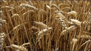 Квотований експорт зерна суперечить інтересам АПК