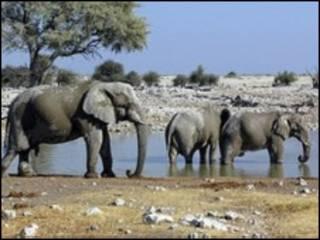 Descobertas foram publicadas na revista African Journal of Ecology. Foto: BBC