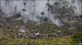 Desmatamento em São Félix do Xingu, no Pará
