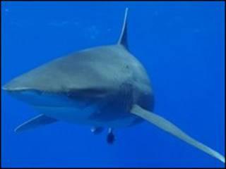 قتلت سمكة القرش سائحة المانية