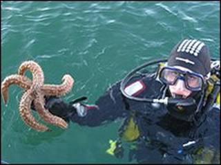 Cientistas coletaram estrela-do-mar na costa da Escócia
