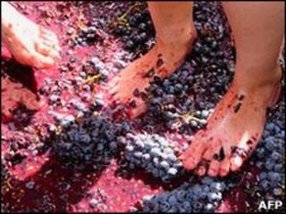 Армянские женщины топчут виноград ногами