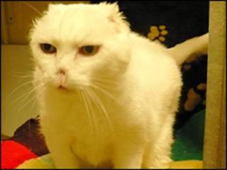Charlie, o gato operado (imagem: Blue Cross)
