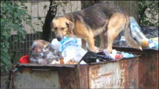 Собаки в центрі Києва