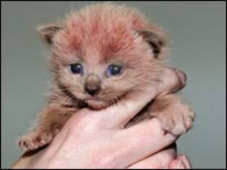 Gatinho achado em fábrica britânica (Foto: Lee Tucker/Cats Protection)