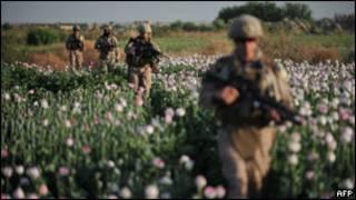 مزرعه خشخاش در افغانستان