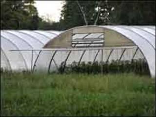 Estufa em fazenda em Uelzen, suspeita de ser origem de surto de E.coli Foto AP