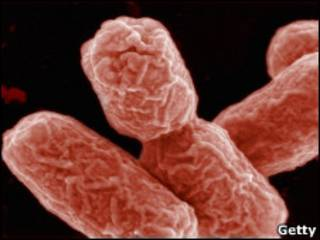 Detalhe da bactéria E.coli