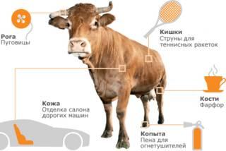 Что можно сделать из одной коровы