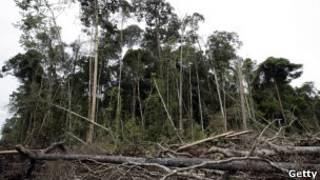 forest in riau, indonesia