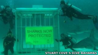 Mergulhadores ao lado de tubarão, nas Ilhas Marshall