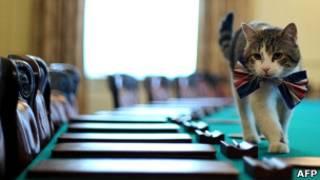 Ларри на столе заседаний британского правительства