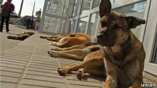 Бездомные собаки в Киеве