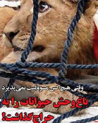 یکی از توله شیرهای پیدا شده در تهران