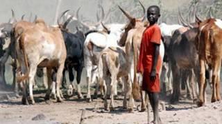 Satar shanu kan haddasa rikici a Nigeria