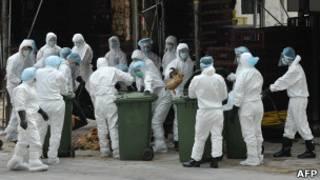 مورد تازه آنفلوآنزای مرغی در هنگ کنگ