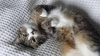 Gato (arquivo/BBC)