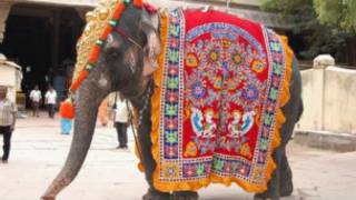Слон при храме в Индии