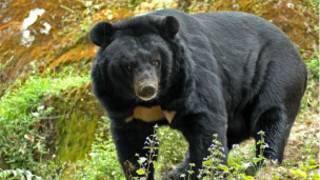 भालू (फ़ाइल फ़ोटो)