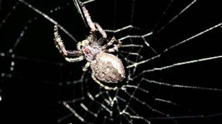 clever spider in the amazon