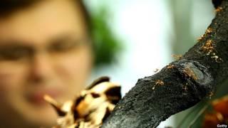 Hormigas coloradas observadas por un humano.