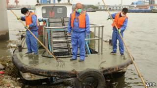 Санитарные работники вылавливают свиную тушу из реки