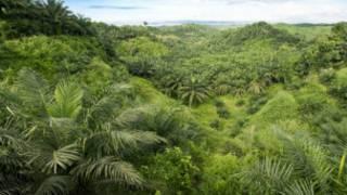 Kebun kelapa sawit