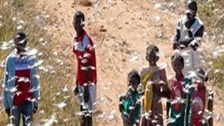 Niños rodeados de langostas en Madagascar Foto gentileza FAO