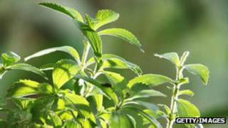 Stevia | Foto: Getty Images
