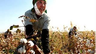 Mujer cosechando algodón