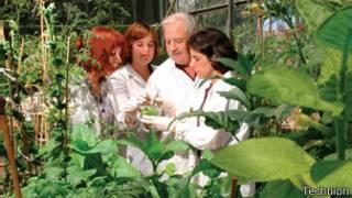 Cientistas israelenses estudam modificação genética de plantas | Foto: Technion