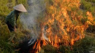 Nông dân đốt ruộng sau thu hoạch