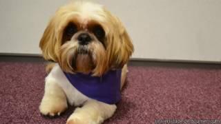 Jack, o cão terapeuta (Foto: Universidade de Bournemouth)